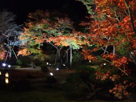 松島紅葉ライトアップ 円通院