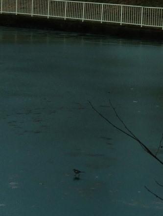 凍結した五色沼