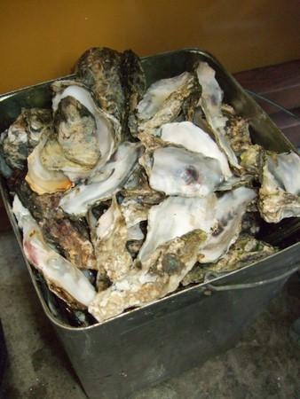 松島 かき小屋 バケツ一杯の牡蠣殻