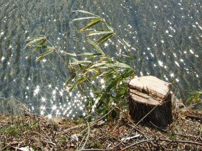 広瀬川のキラキラ