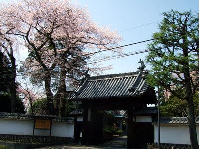 知事公邸の桜満開