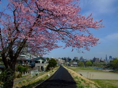 角五郎の遊歩道にて