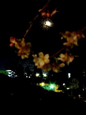 榴岡公園の夜桜