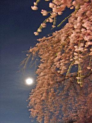 榴岡公園の桜と月