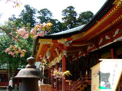 塩竃神社と塩竃桜
