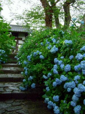 うっそうとした資福寺への道