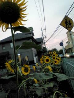 20110815181817.jpg