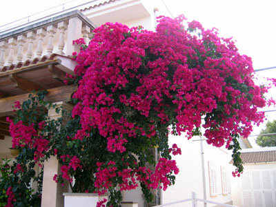 Sa Rapitaで見つけた見事な花