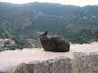 デイアの黒猫