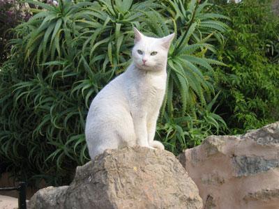 デイアの白ネコ