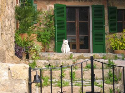 デイアの白ネコもう一匹
