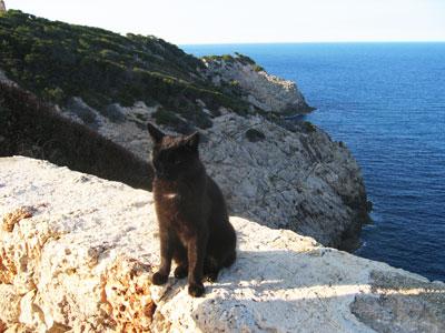 黒猫さんと海