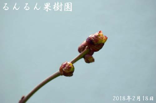 オニールの芽