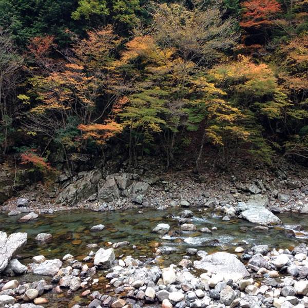 tenkawa_2014_11_5_4.jpg