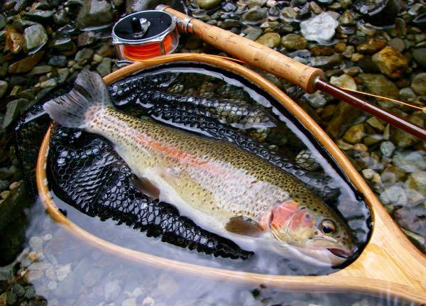天川管理釣り場釣果