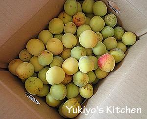 Yukiyo's Kitchen 梅の酵素