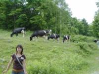 斉藤牧場・牛