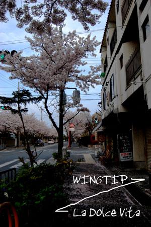 桜さくらさくら