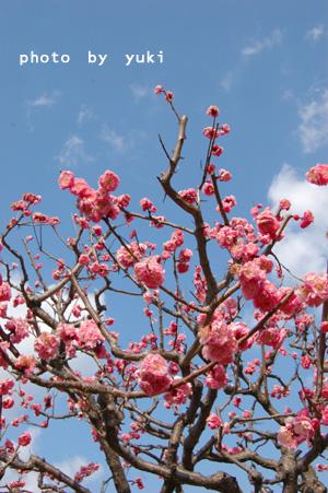 大仙公園の花
