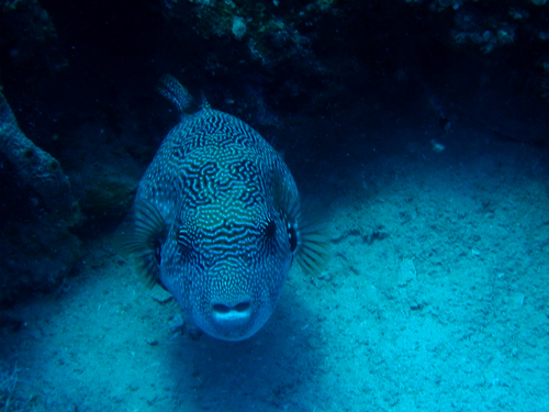Under Water of Indian Ocean