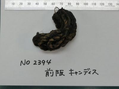 CIMG5828.JPG