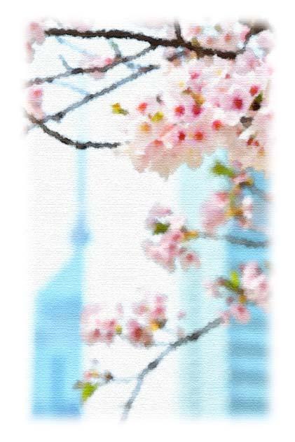 福岡タワー、桜