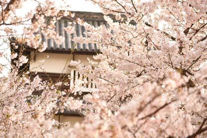 大濠公園、潮見櫓、桜