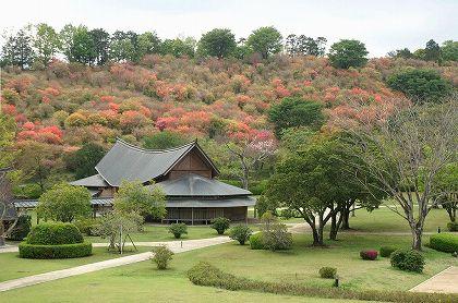 高取山のミツバツツジ