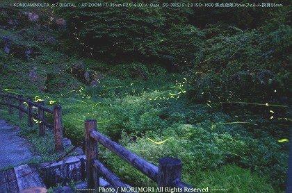 小林市 出の山公園のホタル 01