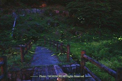 小林市 出の山公園のホタル 02