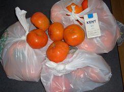 巨大で大量の柿