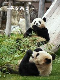 お食事ちぅの双子パンダ