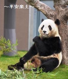 木に寄りかかって食べるパンダ