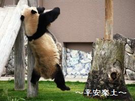 落ちそうになるパンダ
