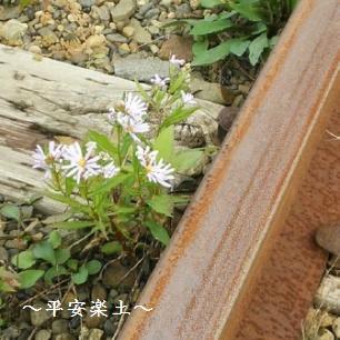 線路わきの花。