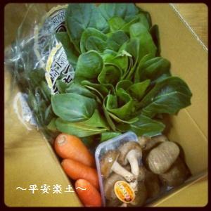 野菜つめあわせ。