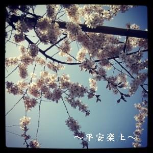 19日の玉蔵院のしだれ桜。