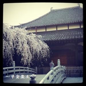 21日の玉蔵院のしだれ桜。