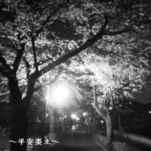 24日夜の武蔵浦和〜別所沼公園の桜並木。