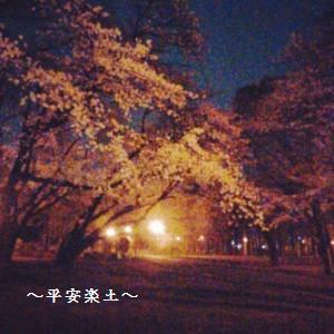 24日夜の田島氷川神社の横の桜。