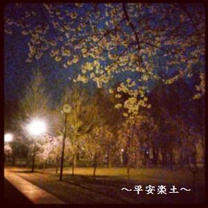 24日夜の別所沼公園の桜。