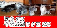 SOS!!
