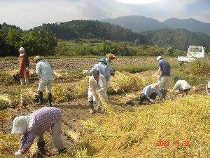 もちプロ もち米 収穫