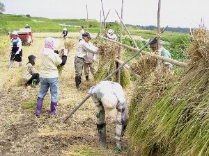 2009-収穫-1