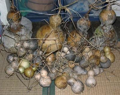 2006年の 収穫