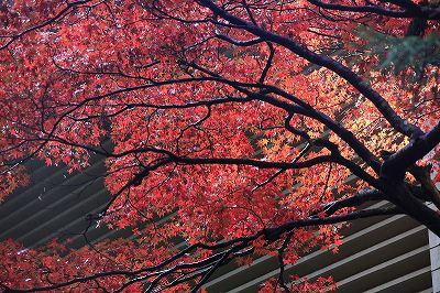 最乗寺の紅葉