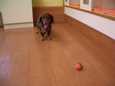 コロンとイチゴちゃんボール
