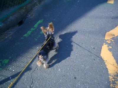 お散歩へレッツゴー!