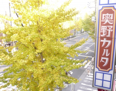 20121124銀杏