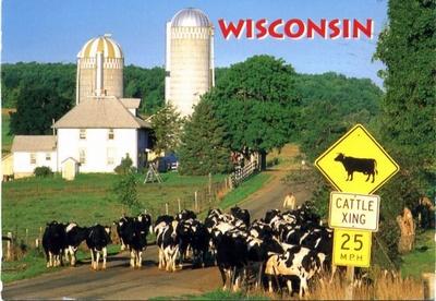 牛が道を歩いてます
